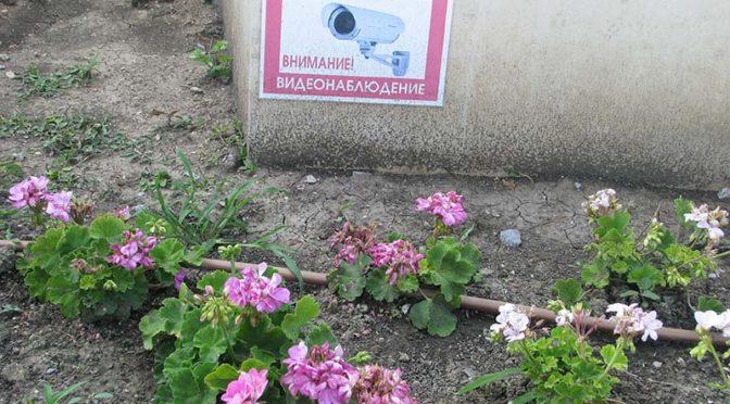 Серия кражби на цветя засече камерата пред БЧК в Търговище