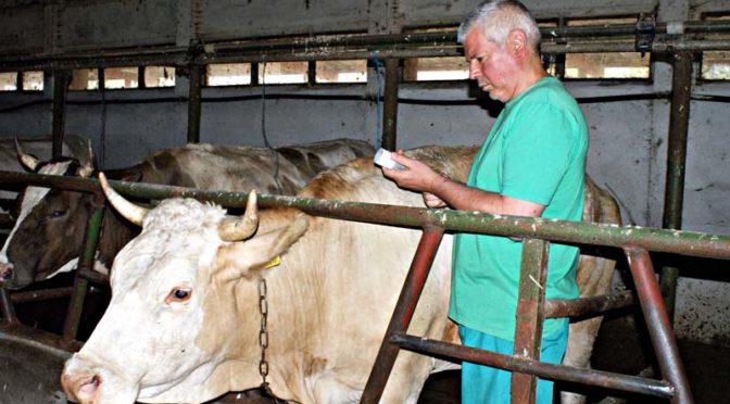 Тече ваксинацията срещу Син език в Търговищко