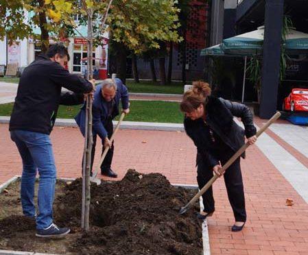 Засадиха лирово дърво в центъра на Търговище