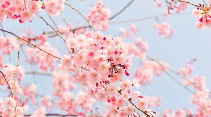 Една пролетна усмивка