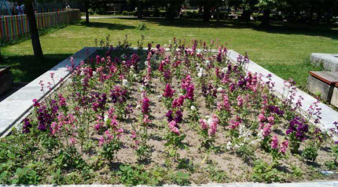 Отново кражба на цветя от градската градина в Търговище