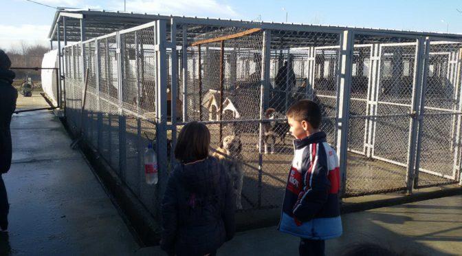 Ученици направиха дарение на Общинския приют за кучета