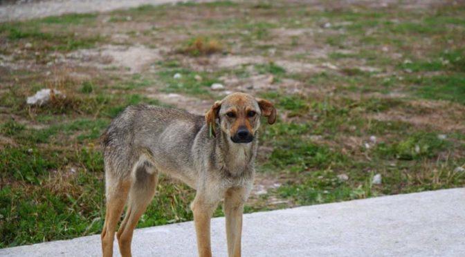 Общинският приют за кучета с кампания за осиновяване в рамките на панаира