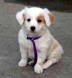 Изготвят се графици за приключване регистрацията на домашни кучета