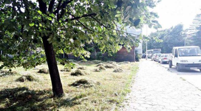 260 декара са площите, планирани за косене през август