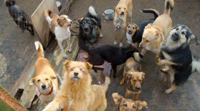 Кампания за кастрация на безстопанствени кучета