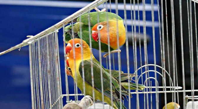 Изложба-базар на гълъби и птици гостува в Търговище