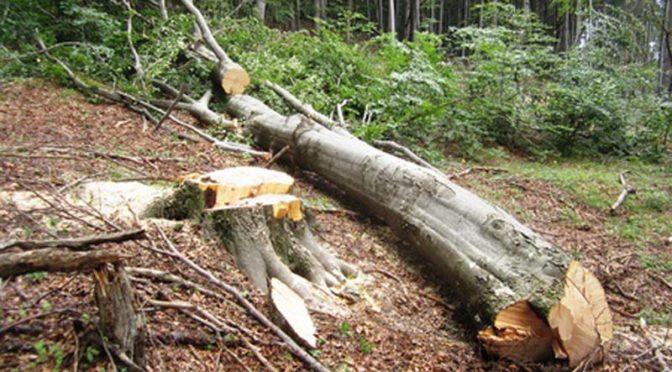 Масови проверки за нарушения в горите извършва СИДП