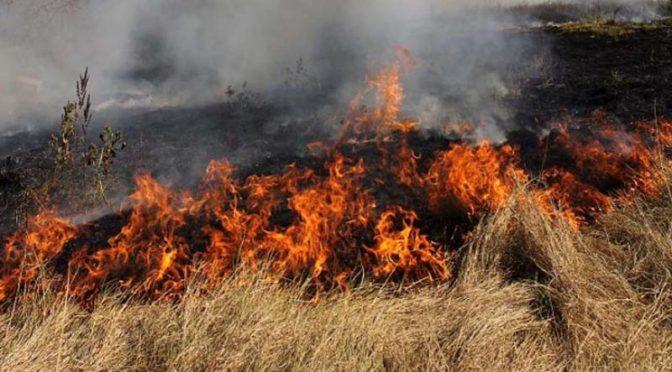 Община Търговище с мерки за пожарна безопасност по време на жътвената кампания