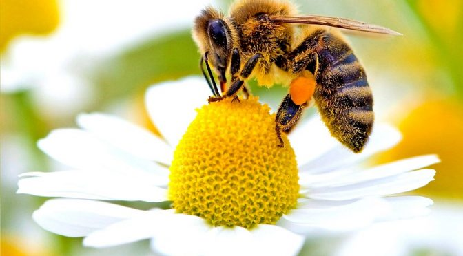 Стартира дейността на работната група за промяна на Наредбата за опазване на пчелите