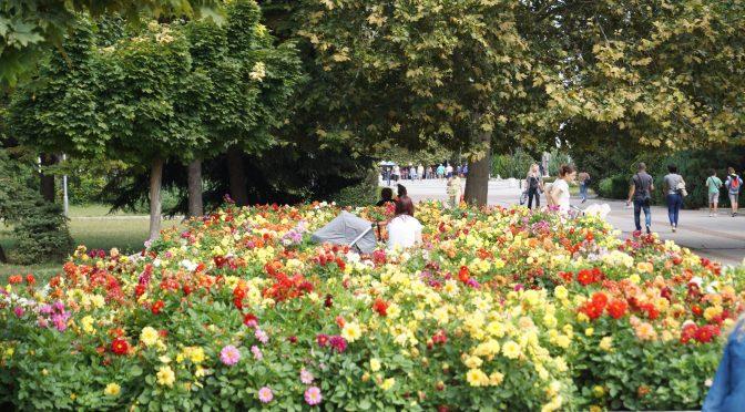 630 нови дървета са засадени от Община Търговище през последните две години