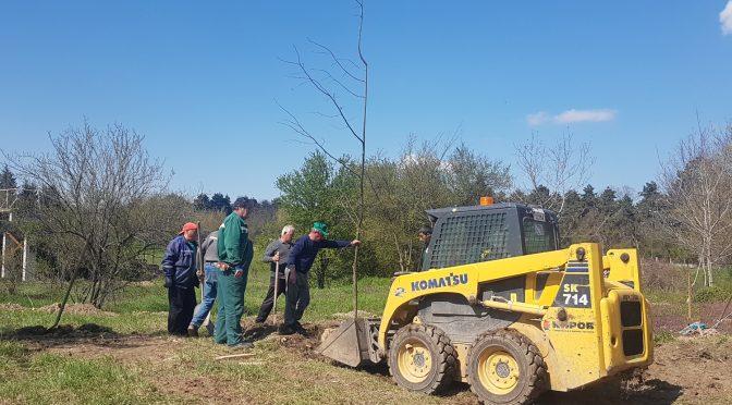 Залесяване по повод Деня на Земята в Търговище